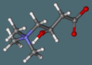 L-carnitine in Phen375 hilft das Fett zu verbrennen