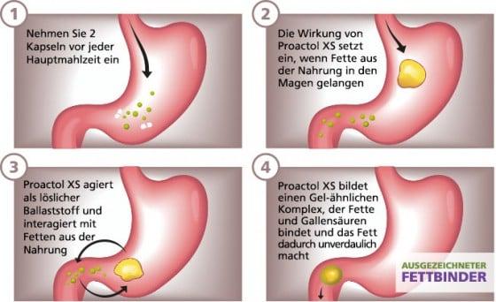 Proactol XS bindet 33% mehr Fett als andere Fettbinder
