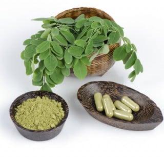 Moringa Oleifera - als Pulver oder in Kapselnform