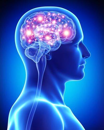 Die Mind-Diät steigert die Leistungsfähigkeit des Gehirns dauerhaft